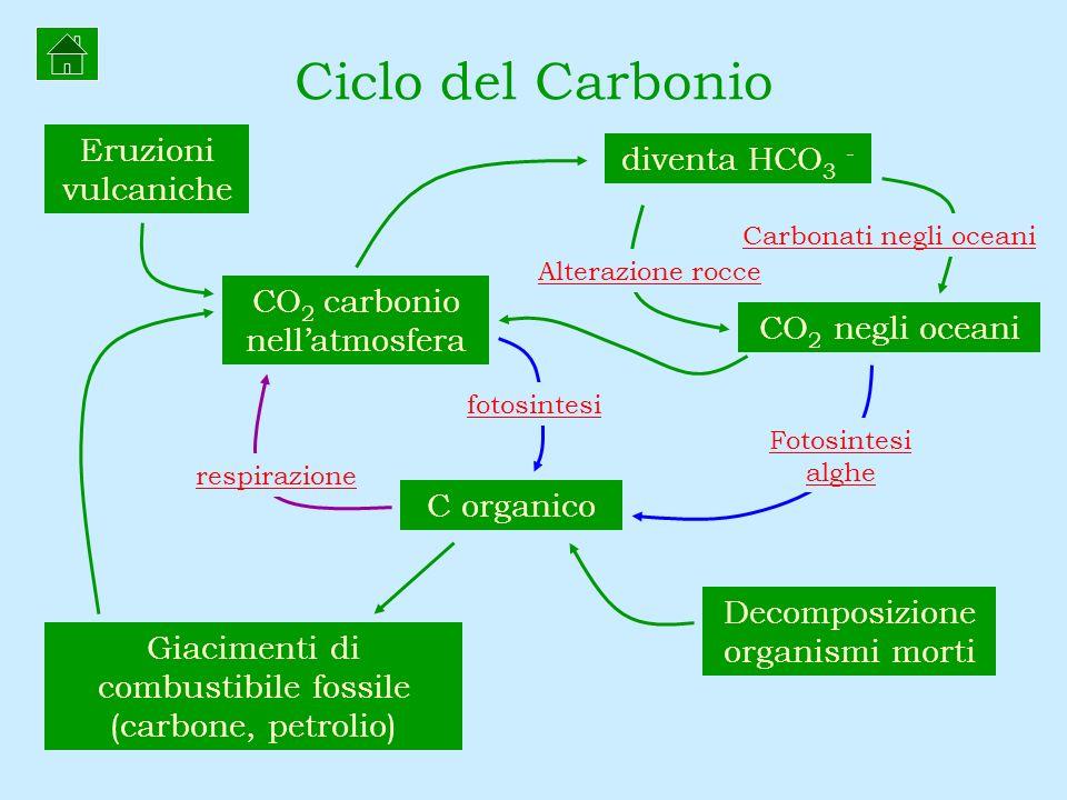 CO 2 negli oceani Ciclo del Carbonio CO 2 carbonio nellatmosfera C organico diventa HCO 3 - Alterazione rocce Carbonati negli oceani Decomposizione or