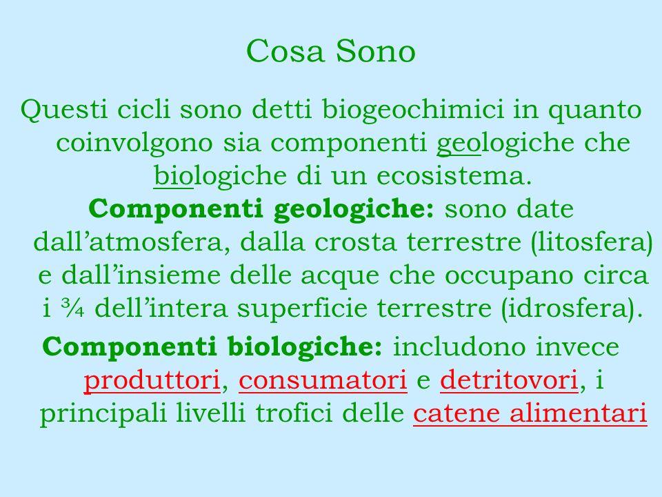 Durata dei Cicli La biosfera, ovvero linsieme delle tre componenti geologiche dei cicli della materia (atmosfera, litosfera e idrosfera), scambia gli elementi e i composti chimici con tali componenti in un ciclo continuo, la cui durata dipende dal tipo di elemento.