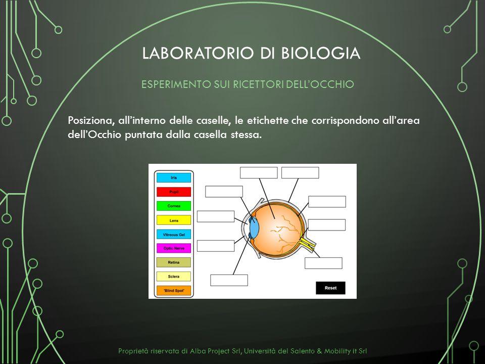 LABORATORIO DI BIOLOGIA Posiziona, allinterno delle caselle, le etichette che corrispondono allarea dellOcchio puntata dalla casella stessa. ESPERIMEN