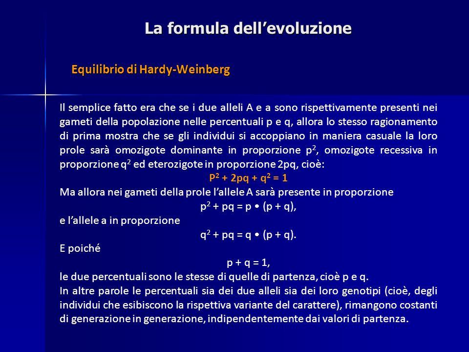 La formula dellevoluzione Il semplice fatto era che se i due alleli A e a sono rispettivamente presenti nei gameti della popolazione nelle percentuali