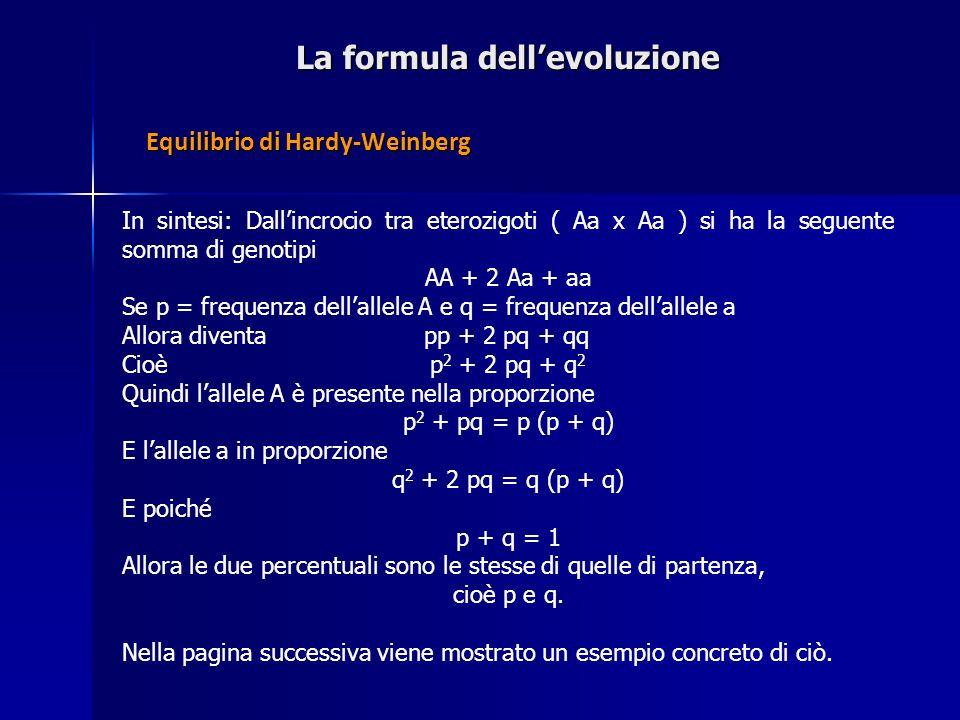 La formula dellevoluzione In sintesi: Dallincrocio tra eterozigoti ( Aa x Aa ) si ha la seguente somma di genotipi AA + 2 Aa + aa Se p = frequenza del