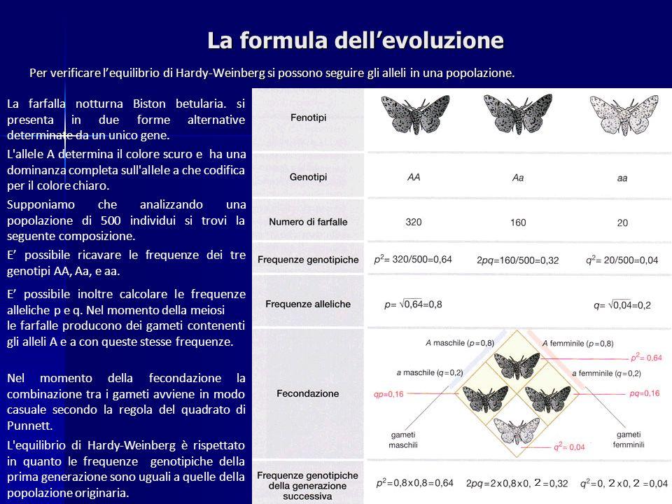 La formula dellevoluzione La farfalla notturna Biston betularia. si presenta in due forme alternative determinate da un unico gene. L'allele A determi