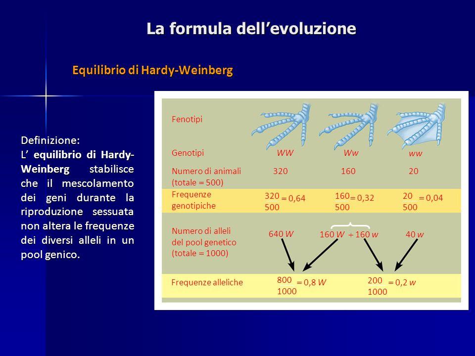La formula dellevoluzione Equilibrio di Hardy-Weinberg Fenotipi GenotipiWWWw ww Numero di animali (totale 500) 32016020 320 500 Frequenze genotipiche
