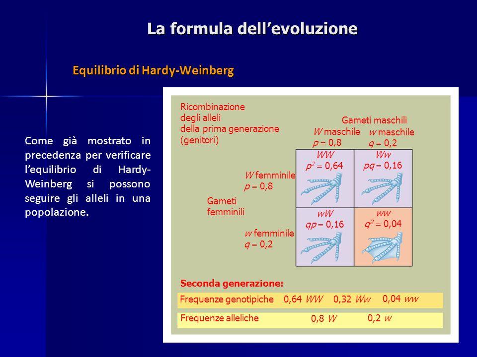 La formula dellevoluzione Equilibrio di Hardy-Weinberg Come già mostrato in precedenza per verificare lequilibrio di Hardy- Weinberg si possono seguir
