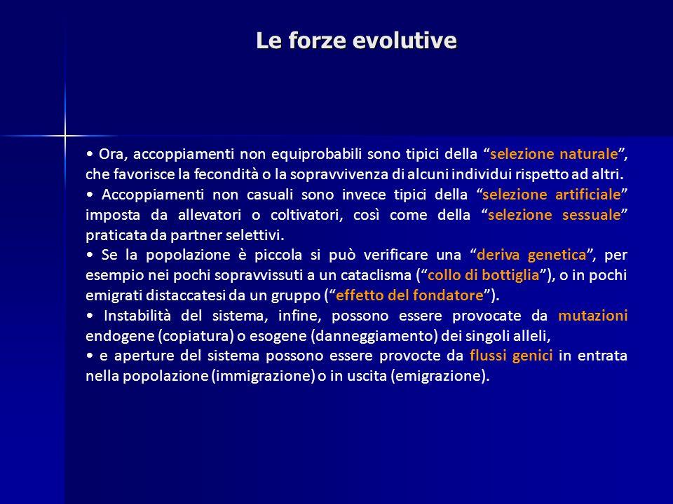 Le forze evolutive Ora, accoppiamenti non equiprobabili sono tipici della selezione naturale, che favorisce la fecondità o la sopravvivenza di alcuni