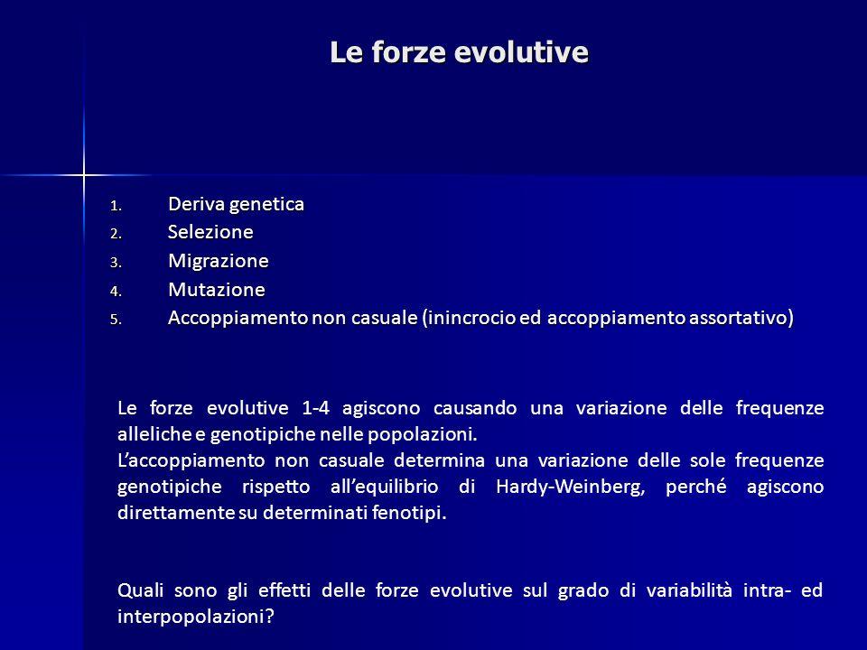 1. Deriva genetica 2. Selezione 3. Migrazione 4. Mutazione 5. Accoppiamento non casuale (inincrocio ed accoppiamento assortativo) Le forze evolutive 1