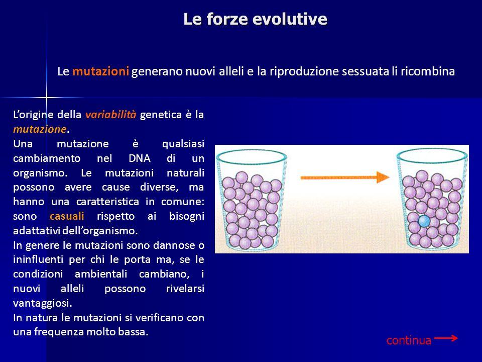 Lorigine della variabilità genetica è la mutazione. Una mutazione è qualsiasi cambiamento nel DNA di un organismo. Le mutazioni naturali possono avere