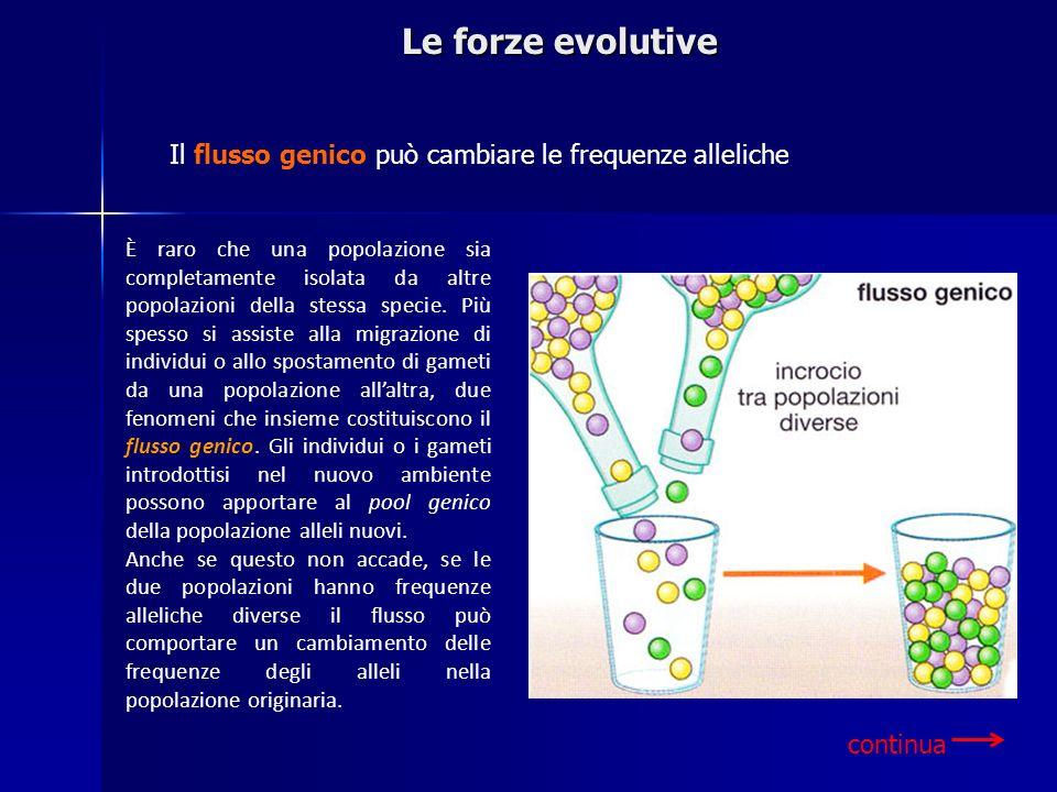 Le forze evolutive È raro che una popolazione sia completamente isolata da altre popolazioni della stessa specie. Più spesso si assiste alla migrazion