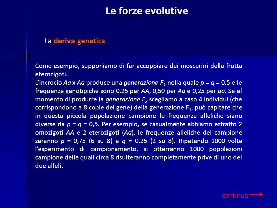 Le forze evolutive Come esempio, supponiamo di far accoppiare dei moscerini della frutta eterozigoti. Lincrocio Aa x Aa produce una generazione F 1 ne