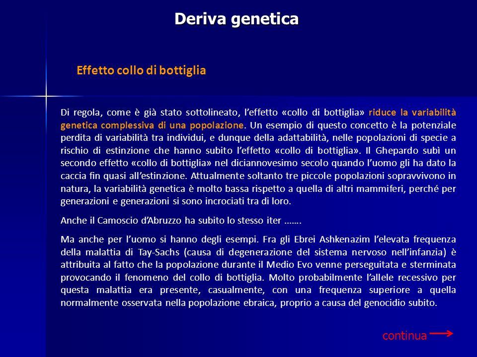 Deriva genetica Di regola, come è già stato sottolineato, leffetto «collo di bottiglia» riduce la variabilità genetica complessiva di una popolazione.