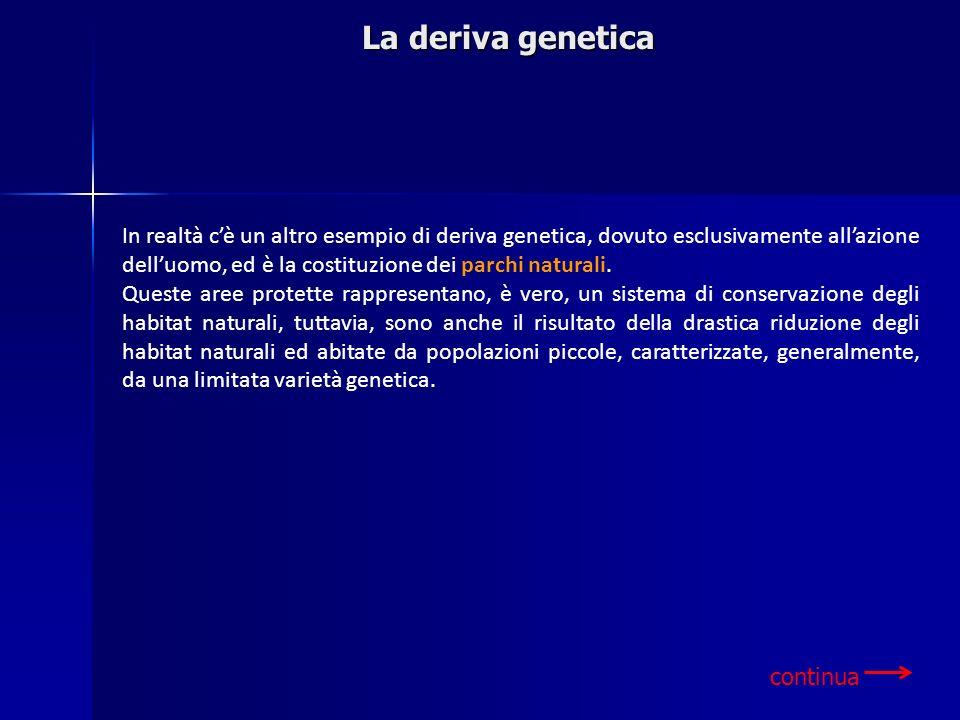 In realtà cè un altro esempio di deriva genetica, dovuto esclusivamente allazione delluomo, ed è la costituzione dei parchi naturali. Queste aree prot