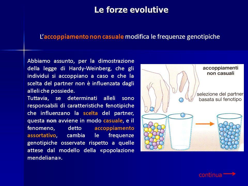 Le forze evolutive Laccoppiamento non casuale modifica le frequenze genotipiche Abbiamo assunto, per la dimostrazione della legge di Hardy-Weinberg, c