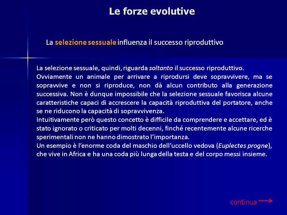 Le forze evolutive La selezione sessuale influenza il successo riproduttivo La selezione sessuale, quindi, riguarda soltanto il successo riproduttivo.