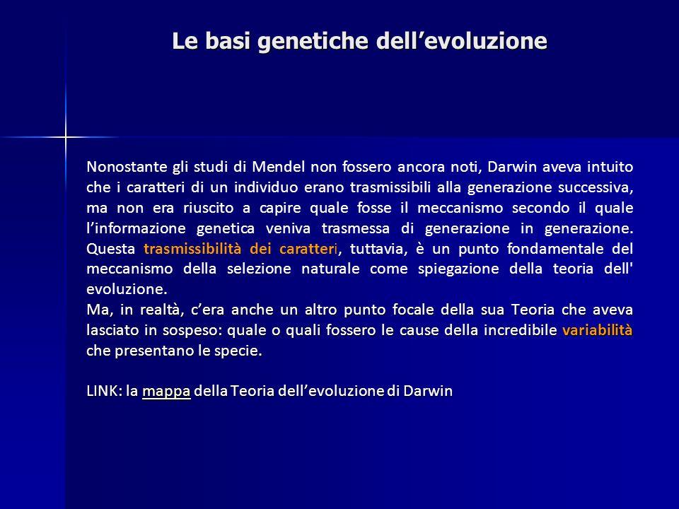 Le basi genetiche dellevoluzione Nonostante gli studi di Mendel non fossero ancora noti, Darwin aveva intuito che i caratteri di un individuo erano tr