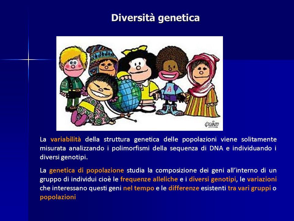 Diversità genetica La variabilità della struttura genetica delle popolazioni viene solitamente misurata analizzando i polimorfismi della sequenza di D