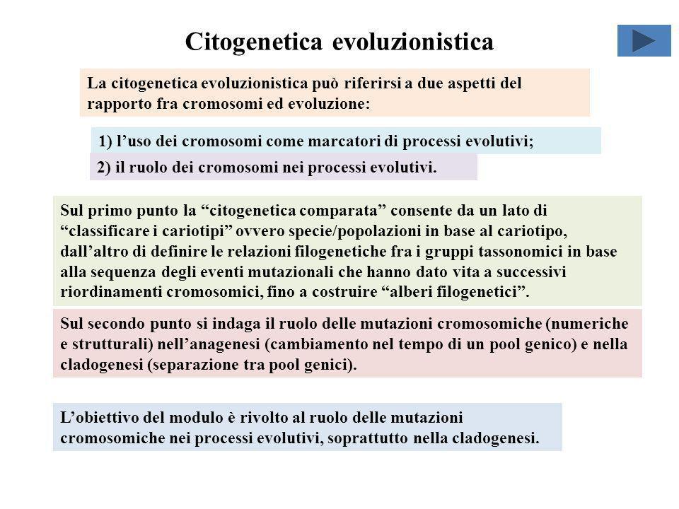 Citogenetica evoluzionistica Lobiettivo del modulo è rivolto al ruolo delle mutazioni cromosomiche nei processi evolutivi, soprattutto nella cladogene