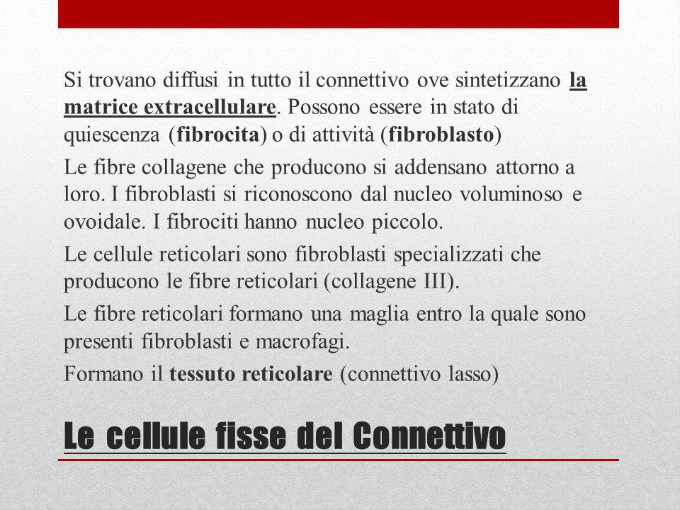 After 3 months following the 1 st treatment Gentile concessione Dr.