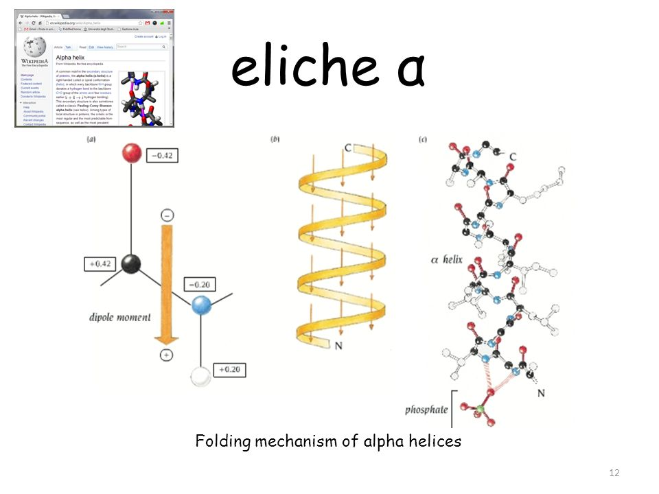 Folding mechanism of alpha helices 12 eliche α
