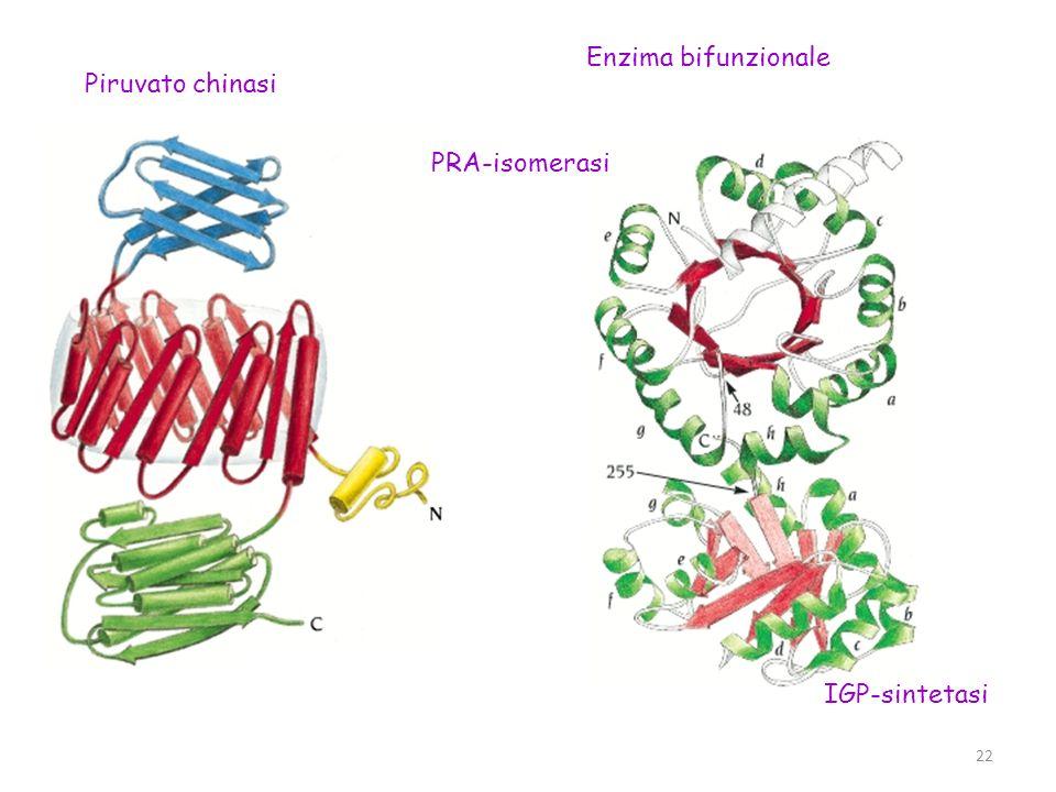 Piruvato chinasi Enzima bifunzionale PRA-isomerasi IGP-sintetasi 22