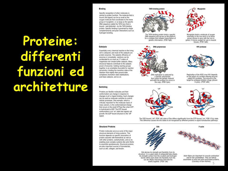 Proteine: differenti funzioni ed architetture 5