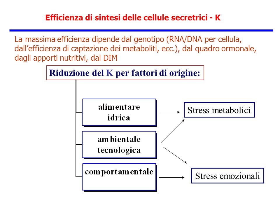 Efficienza di sintesi delle cellule secretrici - K La massima efficienza dipende dal genotipo (RNA/DNA per cellula, dallefficienza di captazione dei m