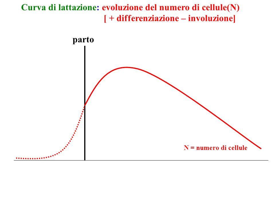 parto Curva di lattazione: evoluzione del numero di cellule(N) [ + differenziazione – involuzione] N = numero di cellule