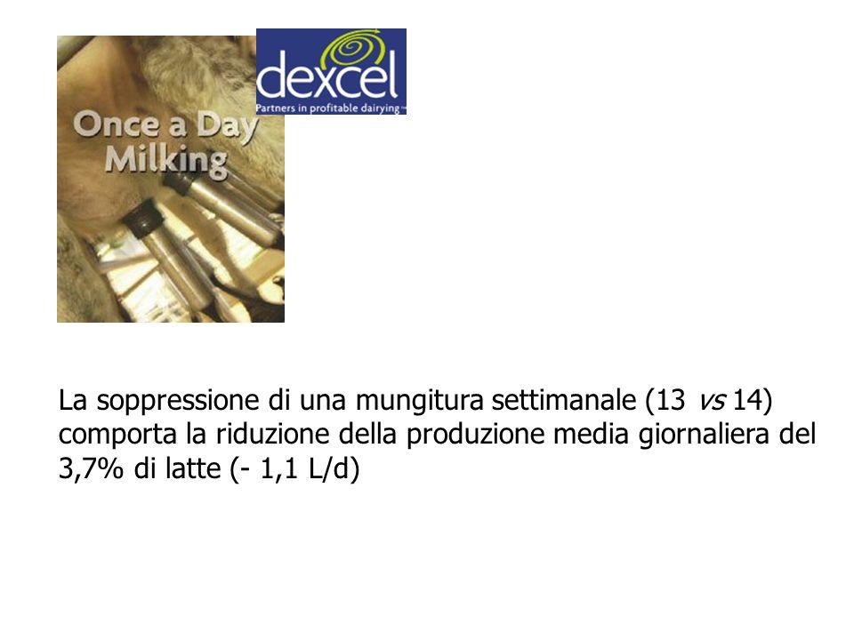 La soppressione di una mungitura settimanale (13 vs 14) comporta la riduzione della produzione media giornaliera del 3,7% di latte (- 1,1 L/d)
