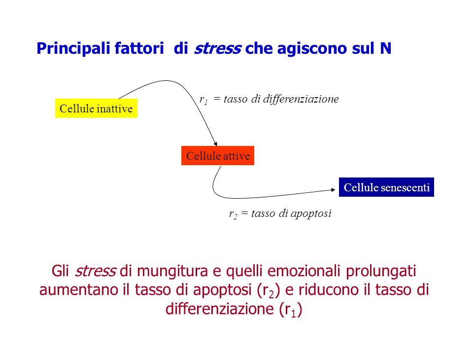 Principali fattori di stress che agiscono sul N Cellule inattive Cellule attive Cellule senescenti r 1 = tasso di differenziazione r 2 = tasso di apop