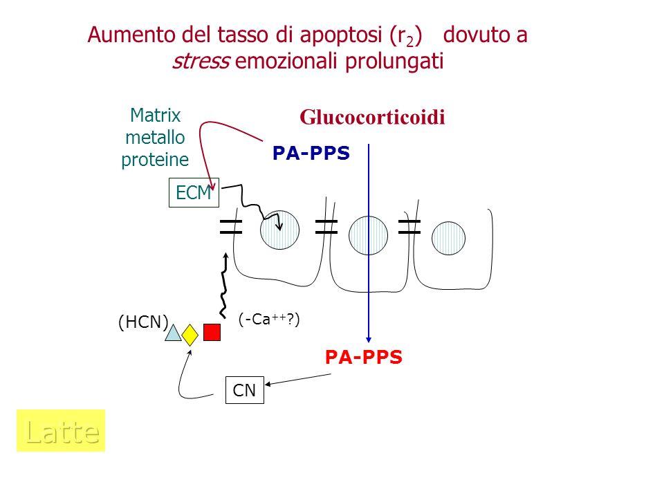 PA-PPS CN (HCN) (-Ca ++ ?) Glucocorticoidi PA-PPS Matrix metallo proteine Aumento del tasso di apoptosi (r 2 ) dovuto a stress emozionali prolungati E