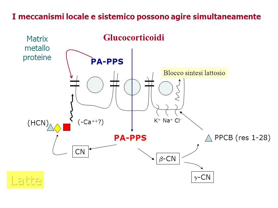 PA-PPS -CN PPCB (res 1-28) K + Na + Cl - Blocco sintesi lattosio CN (HCN) (-Ca ++ ?) Glucocorticoidi I meccanismi locale e sistemico possono agire sim
