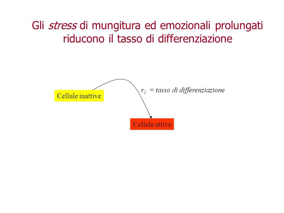 Cellule inattive Cellule attive r 1 = tasso di differenziazione Gli stress di mungitura ed emozionali prolungati riducono il tasso di differenziazione