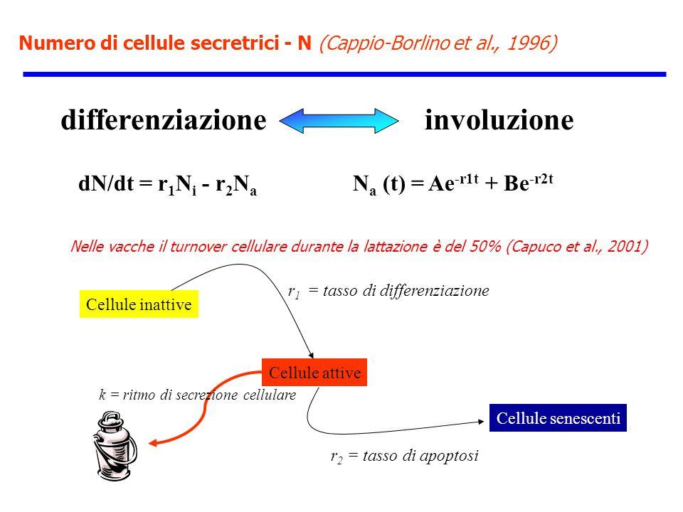 Numero di cellule secretrici - N (Cappio-Borlino et al., 1996) differenziazione involuzione Cellule inattive Cellule attive dN/dt = r 1 N i - r 2 N a