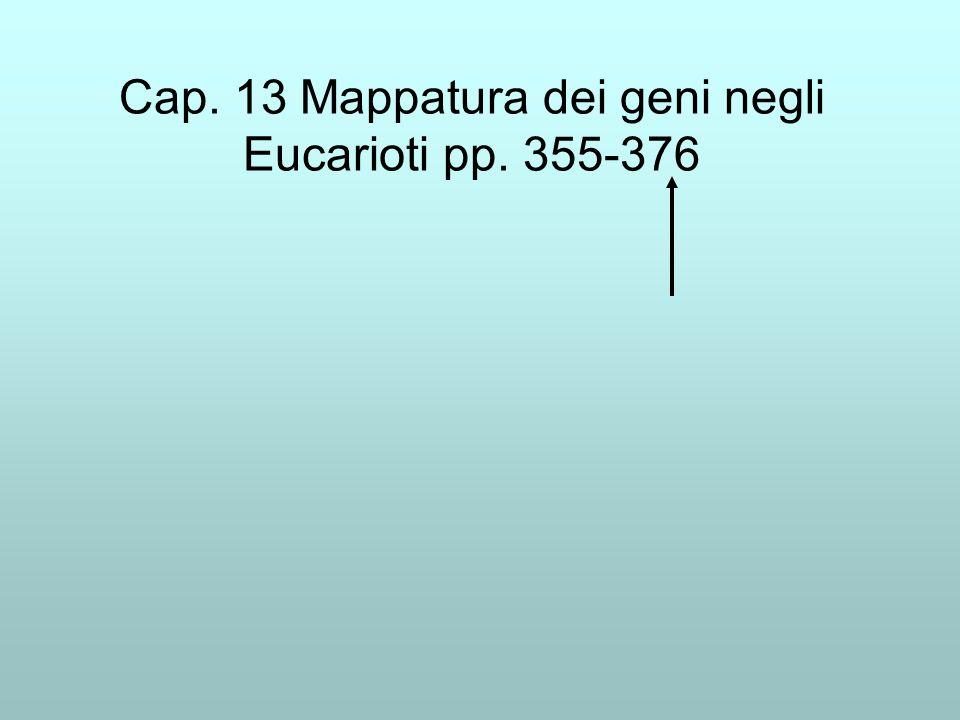 Cap. 13 Mappatura dei geni negli Eucarioti pp. 355-376