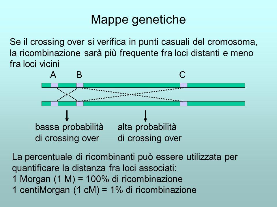 Mappe genetiche Se il crossing over si verifica in punti casuali del cromosoma, la ricombinazione sarà più frequente fra loci distanti e meno fra loci