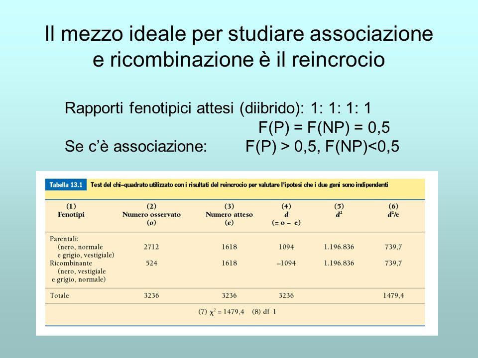 Rapporti fenotipici attesi (diibrido): 1: 1: 1: 1 F(P) = F(NP) = 0,5 Se cè associazione: F(P) > 0,5, F(NP)<0,5