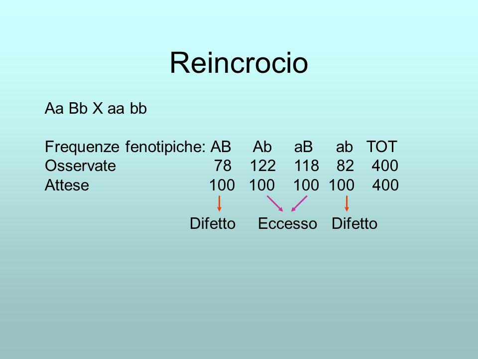 Reincrocio Aa Bb X aa bb Frequenze fenotipiche: AB Ab aB ab TOT Osservate 78 122 118 82 400 Attese 100 100 100 100 400 Difetto Eccesso Difetto