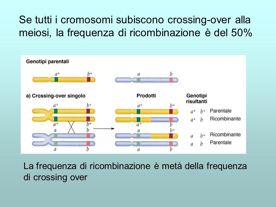 Se tutti i cromosomi subiscono crossing-over alla meiosi, la frequenza di ricombinazione è del 50% La frequenza di ricombinazione è metà della frequen