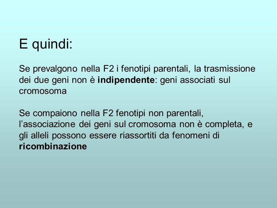 E quindi: Se prevalgono nella F2 i fenotipi parentali, la trasmissione dei due geni non è indipendente: geni associati sul cromosoma Se compaiono nell