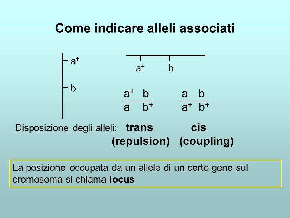 Come indicare alleli associati a+ba+b a + b a b + a b a + b + Disposizione degli alleli: trans cis (repulsion) (coupling) La posizione occupata da un