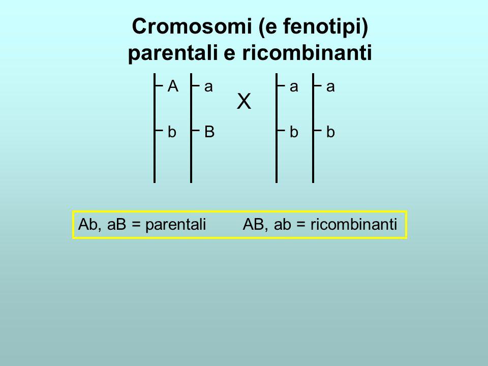 Cromosomi (e fenotipi) parentali e ricombinanti AbAb aBaB abab abab X Ab, aB = parentali AB, ab = ricombinanti