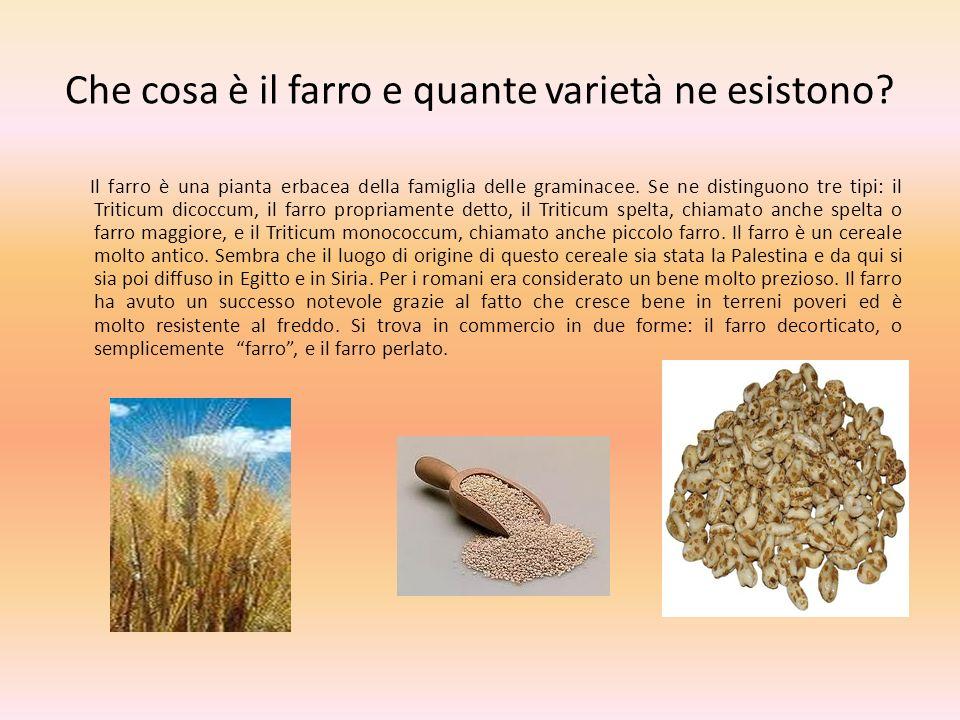 Che cosa è il farro e quante varietà ne esistono? Il farro è una pianta erbacea della famiglia delle graminacee. Se ne distinguono tre tipi: il Tritic