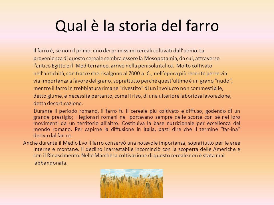 Qual è la storia del farro Il farro è, se non il primo, uno dei primissimi cereali coltivati dalluomo. La provenienza di questo cereale sembra essere