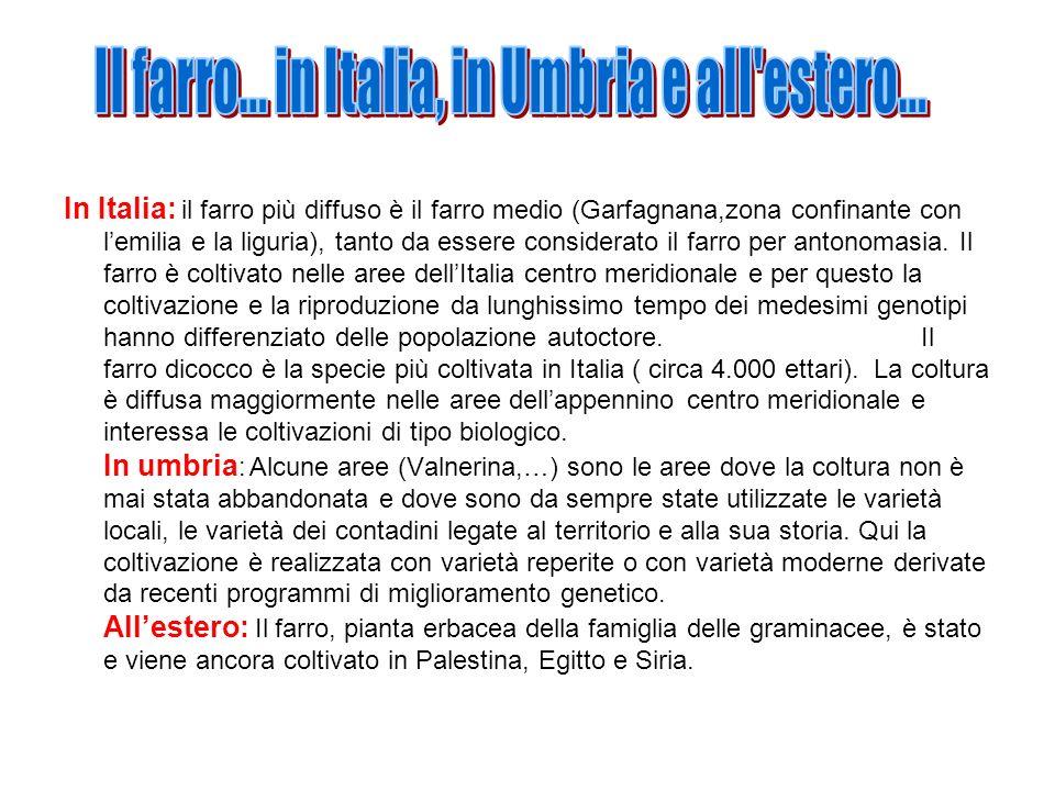 In Italia: il farro più diffuso è il farro medio (Garfagnana,zona confinante con lemilia e la liguria), tanto da essere considerato il farro per anton