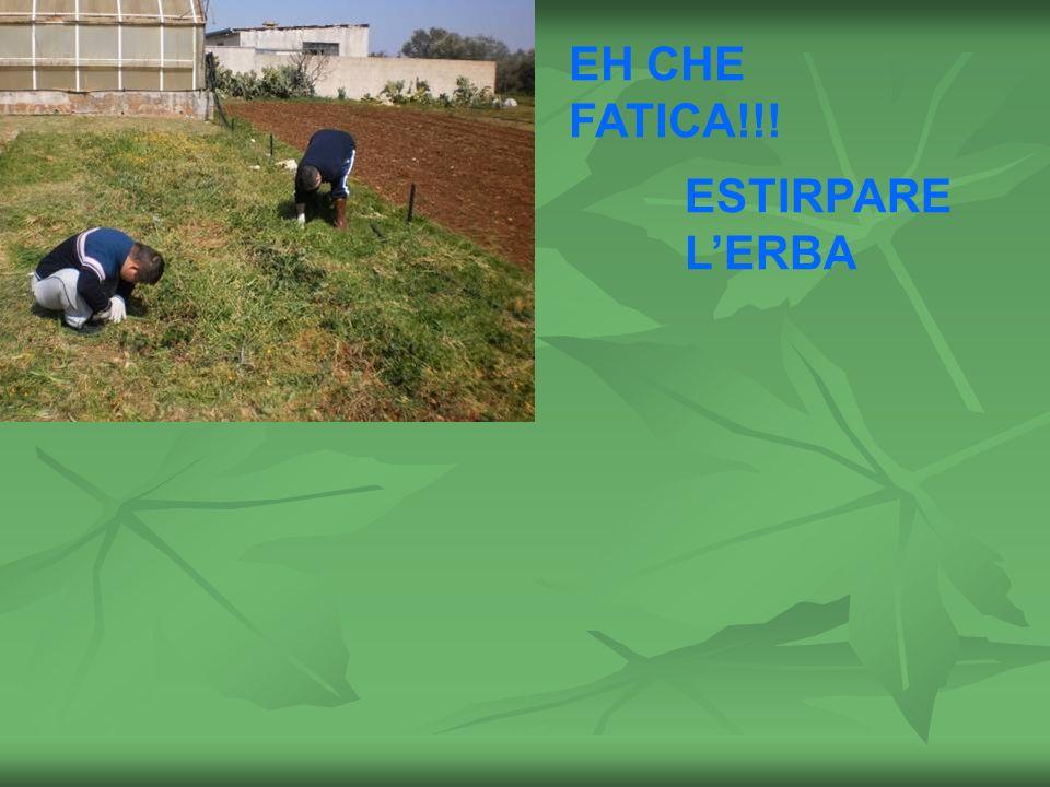EH CHE FATICA!!! ESTIRPARE LERBA