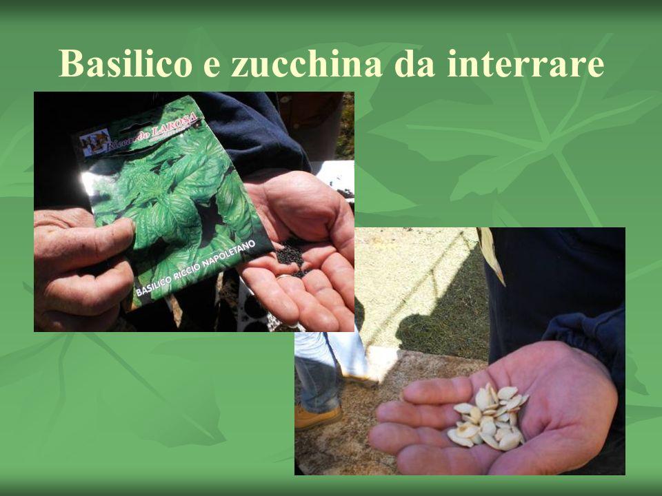 Basilico e zucchina da interrare