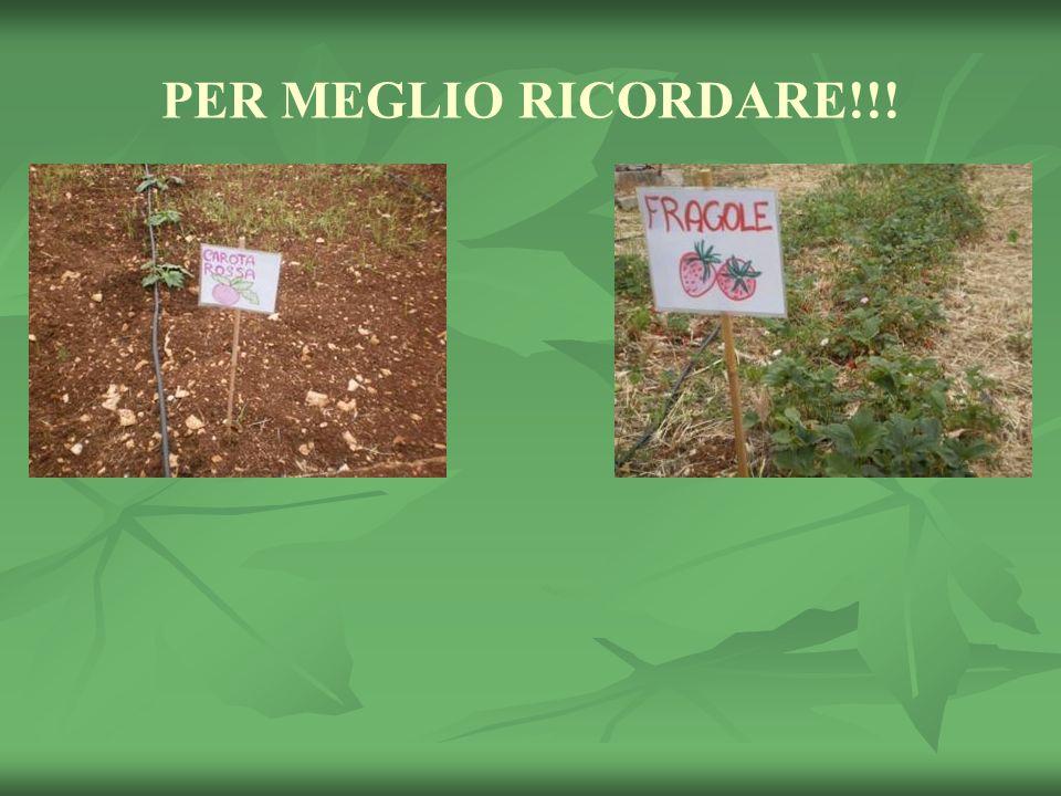 PER MEGLIO RICORDARE!!!
