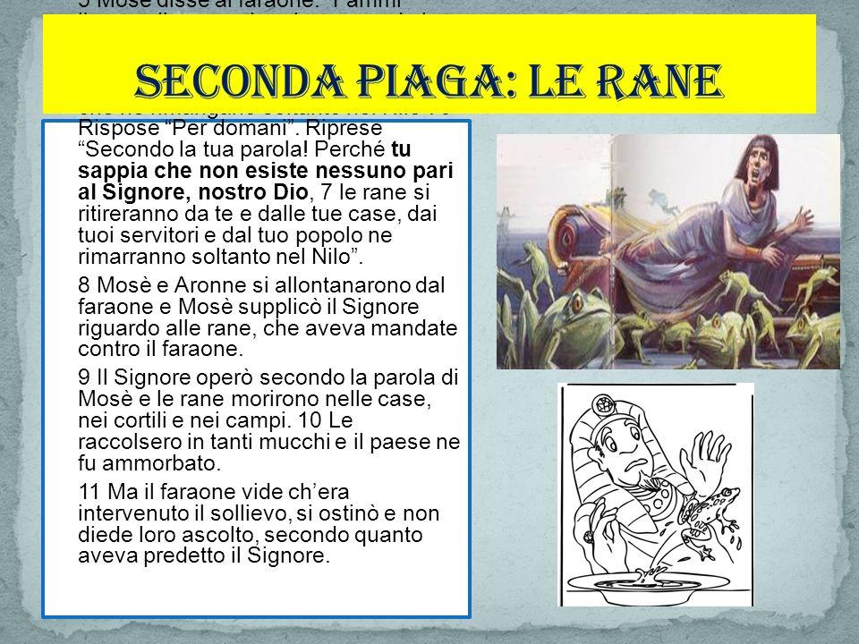 12 Quindi il Signore disse a Mosè Comanda ad Aronne Stendi il tuo bastone, percuoti la polvere della terra essa si muterà in zanzare in tutto il paese dEgitto.