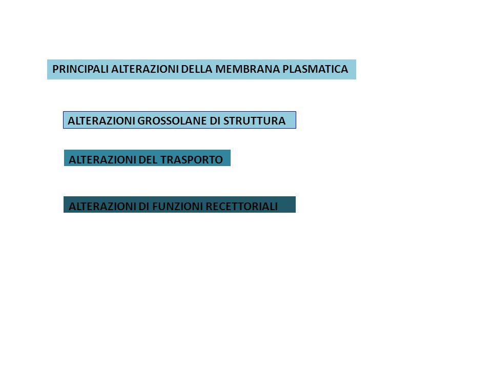 PRINCIPALI ALTERAZIONI DELLA MEMBRANA PLASMATICA ALTERAZIONI GROSSOLANE DI STRUTTURA ALTERAZIONI DEL TRASPORTO ALTERAZIONI DI FUNZIONI RECETTORIALI