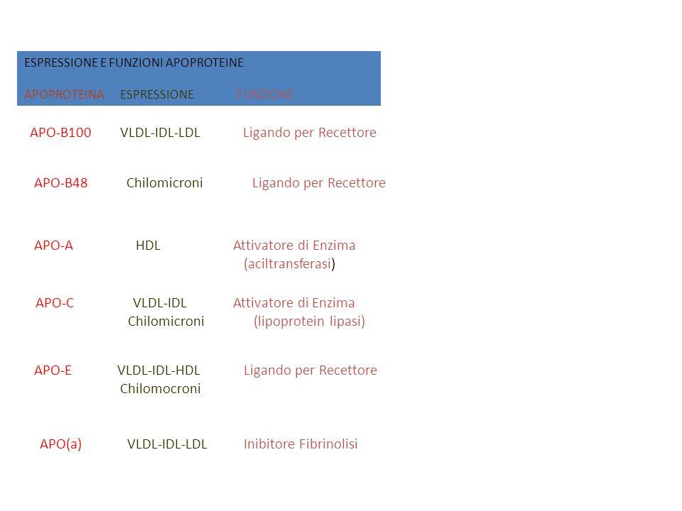ESPRESSIONE E FUNZIONI APOPROTEINE APOPROTEINA ESPRESSIONE FUNZIONE APO-B100 VLDL-IDL-LDL Ligando per Recettore APO-B48 Chilomicroni Ligando per Recet