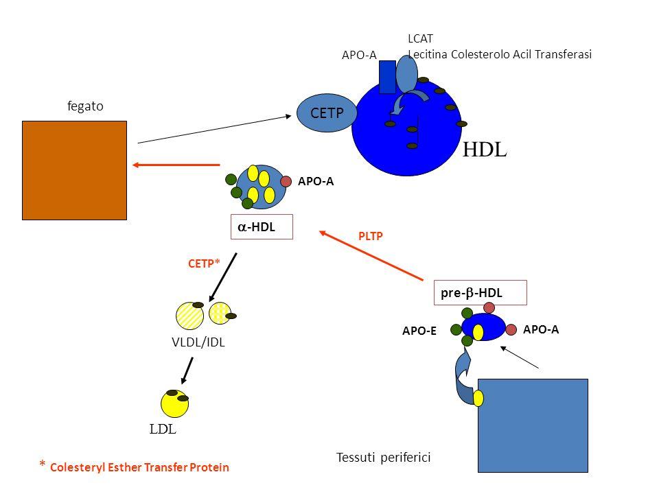 fegato VLDL/IDL CETP* LDL APO-A LCAT Lecitina Colesterolo Acil Transferasi HDL CETP APO-A -HDL pre- -HDL APO-E APO-A PLTP Tessuti periferici * Coleste